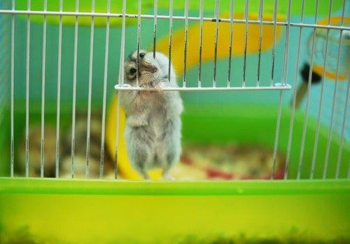 pets indoor hamster
