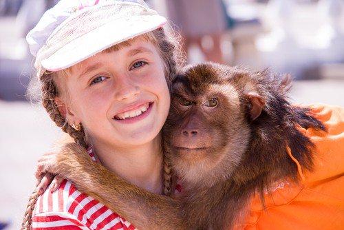 pets indoor monkey